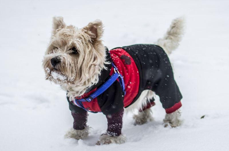 hond met een winterjas